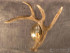 02a-AWSR-Whitetail-Deer-Right-Antler-Wall-Sconce
