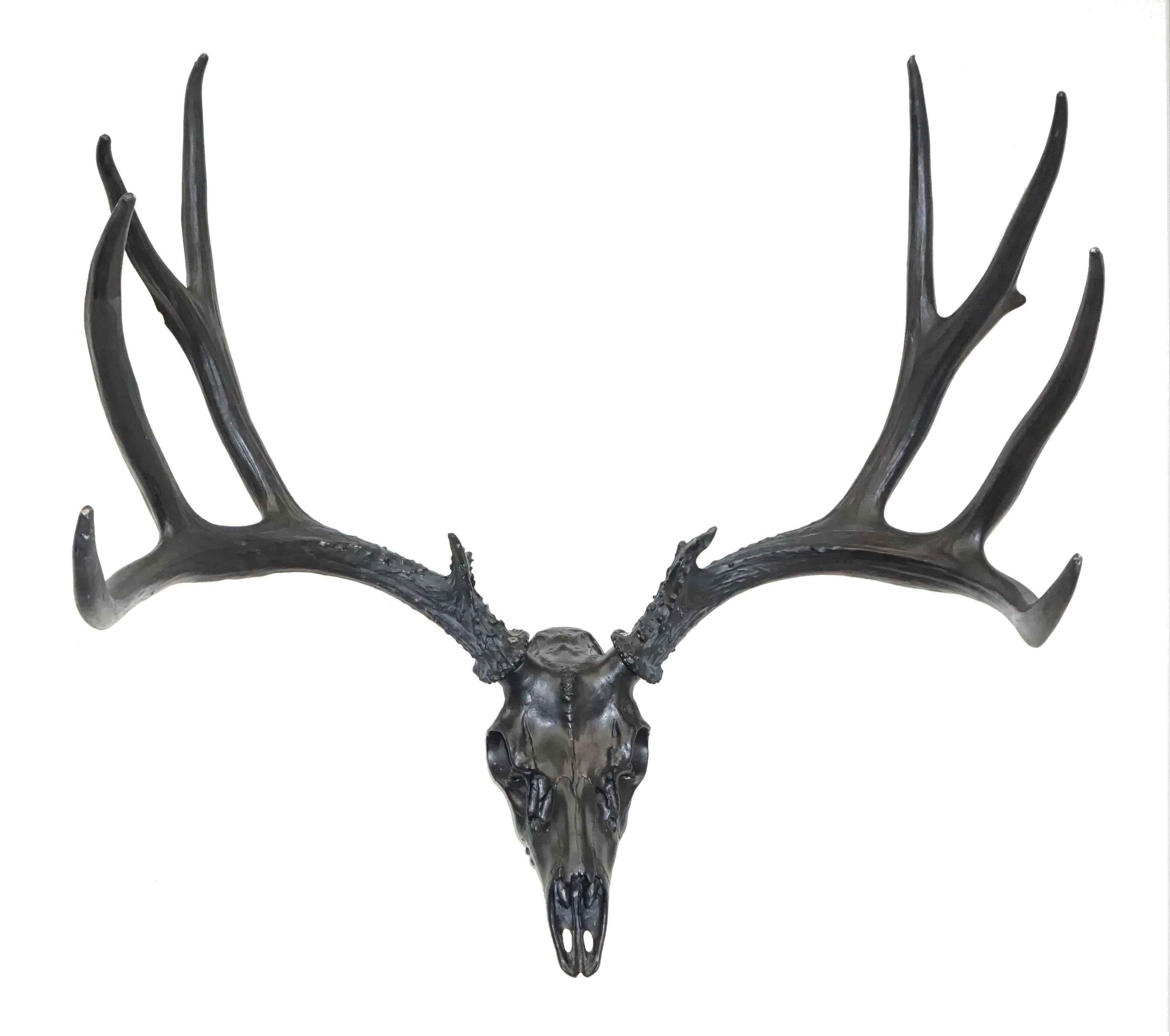 European Mule Deer Mount Cast Horn Designs