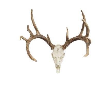 European Whitetail Deer mount
