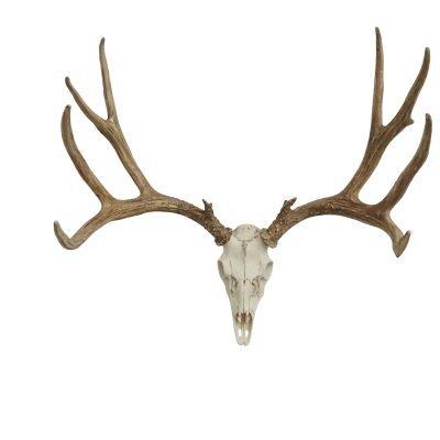 European Mule Deer Mount