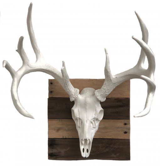 European Elk Mount
