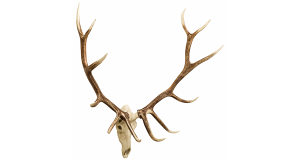 Elk European Mount