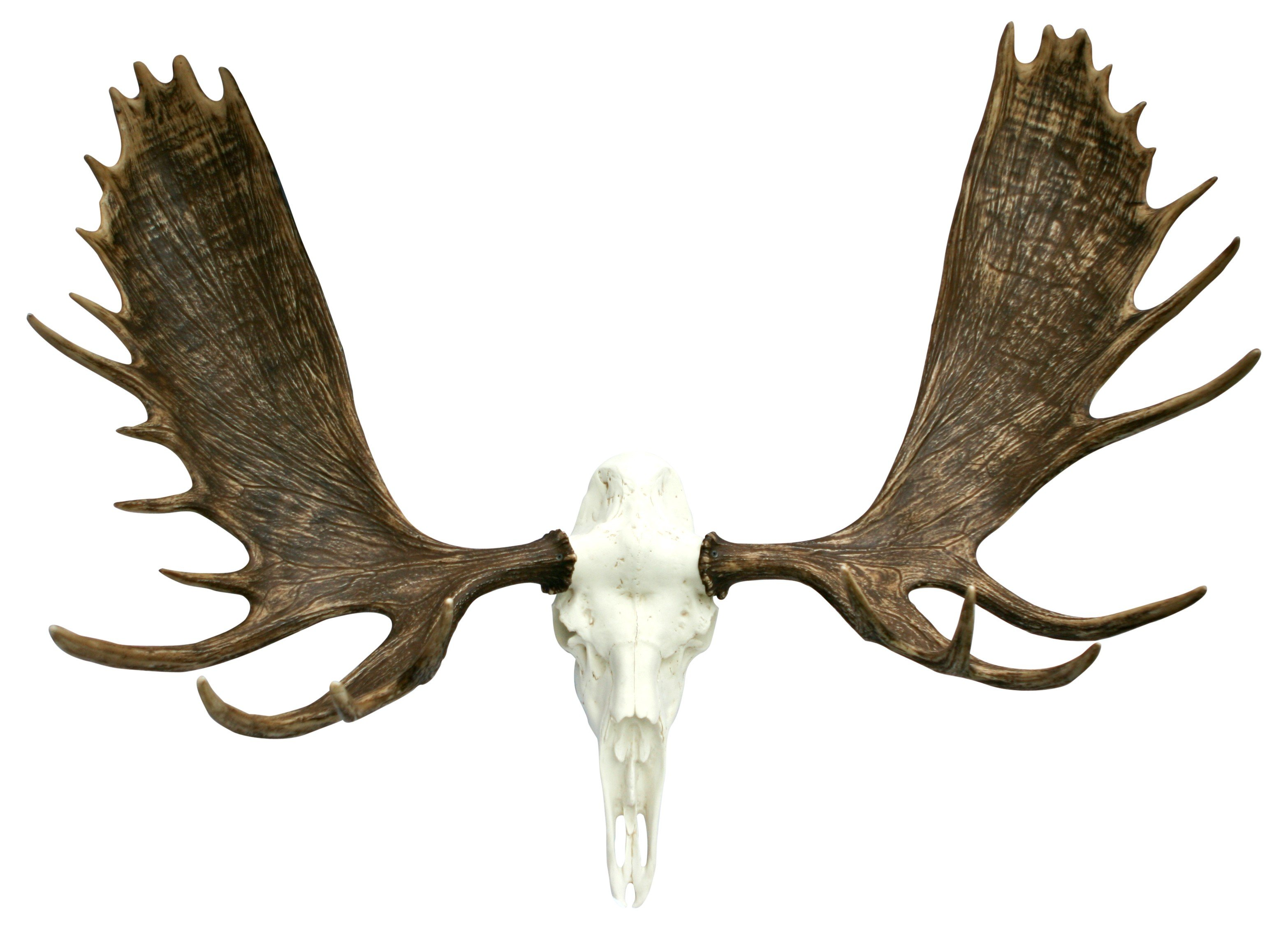 how to get deer antlers ready to mount