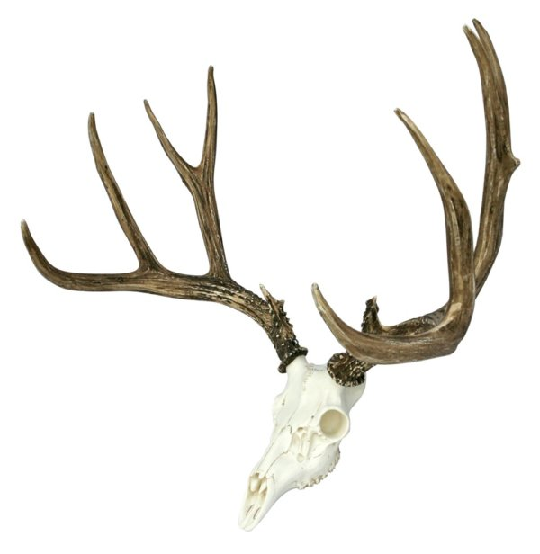 European Mule Deer Mount