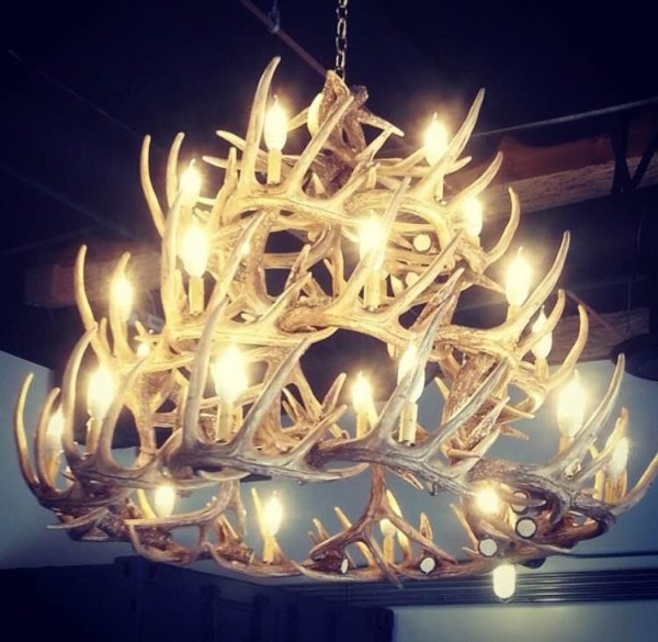 Whitetail Deer 42 Antler Chandelier