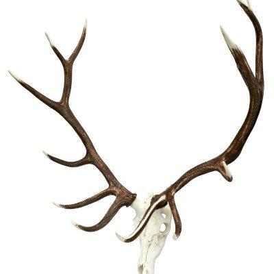 European elkhorn mount