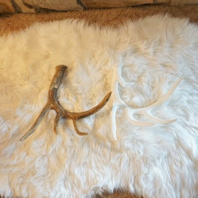 Whitetail Deer Faux Antler