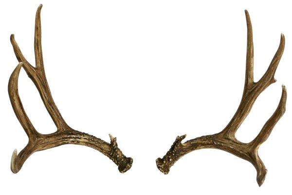 Mule Deer Faux Antler
