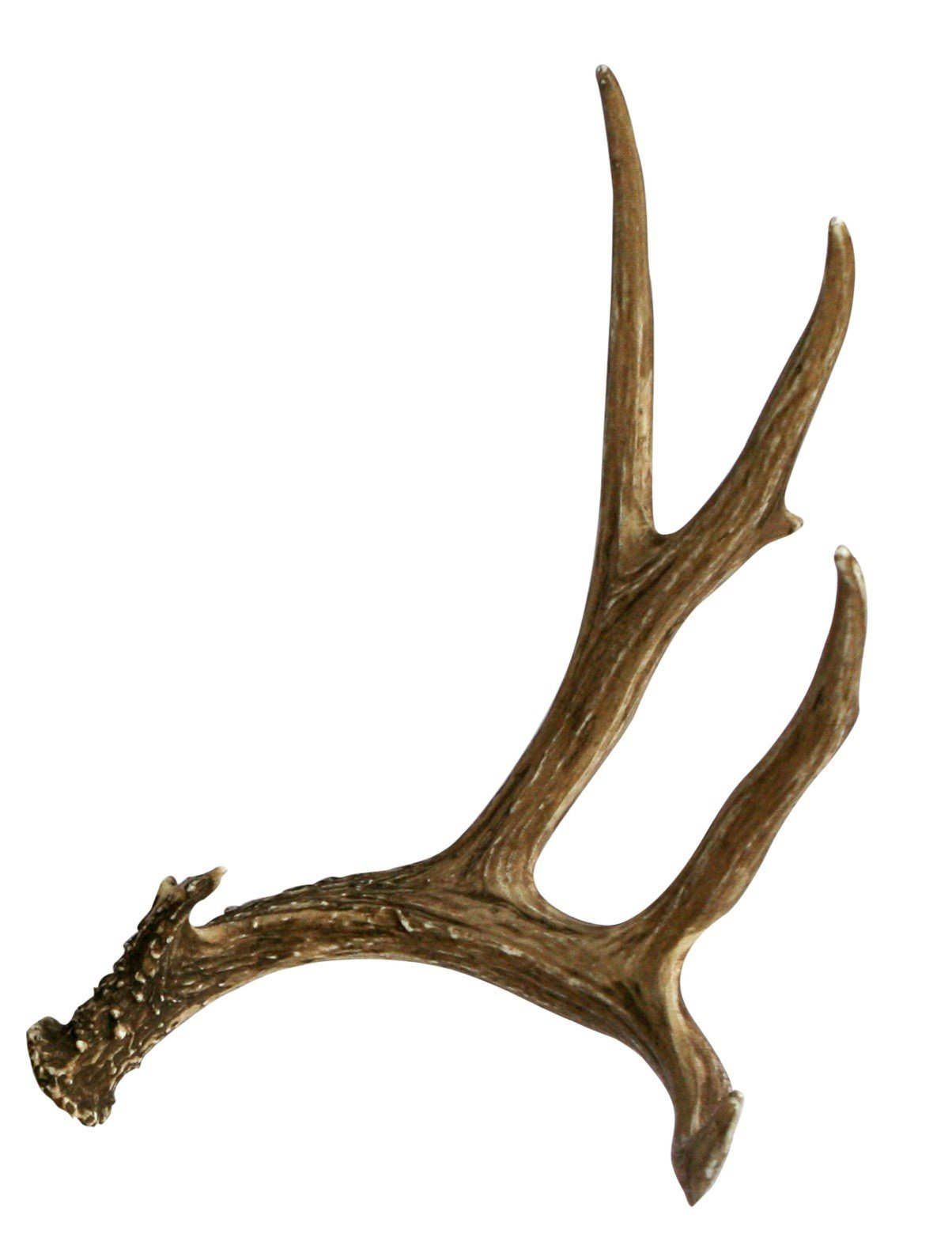 Mule Deer Faux Antler Cast Horn Designs