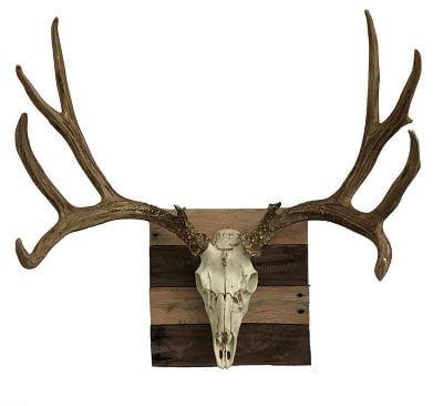 European Elk Mount