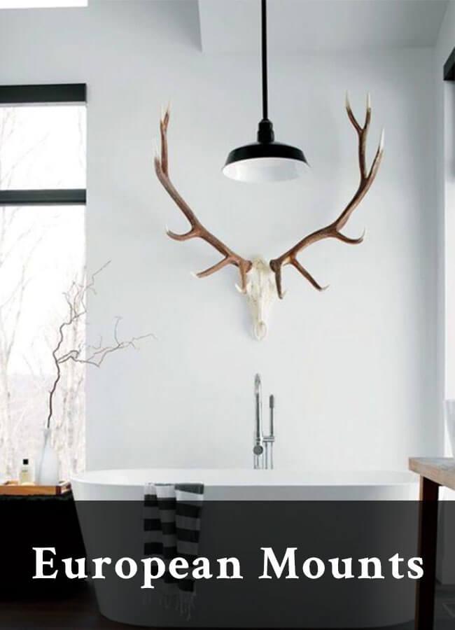 European mounts for elk, deer, moose, bison antlers